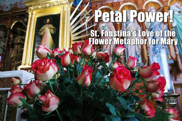 Petal Power The Divine Mercy Message From The Marians Of The
